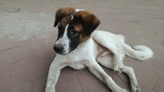 ឆ្កែ - Dog - Dogs - Funny Dog - Dog Pet - Cute Dogs 2020 - Funny Dogs Videos