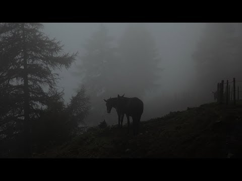 Säumertreffen 2017 in Natters - Österreich