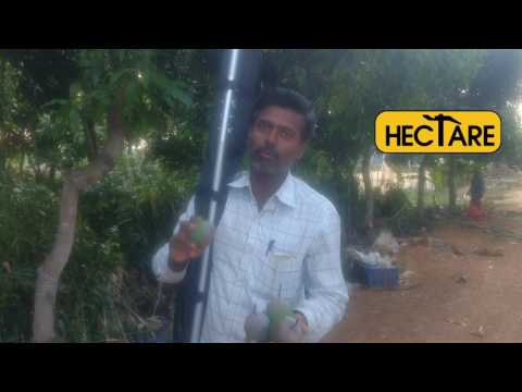 Hectare Mango Picker review
