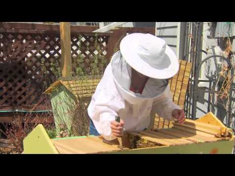 Farm To Fork Wyoming - Beekeeping