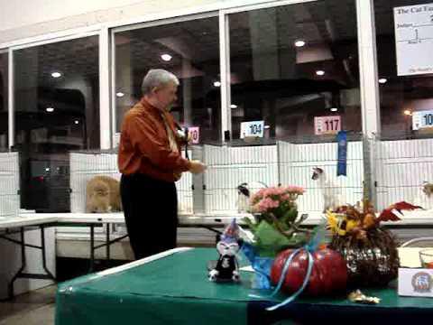 CFA Illinois Feline Fanciers cat show in Springfeild Il 10/16/10 Ivy Cat Ram final