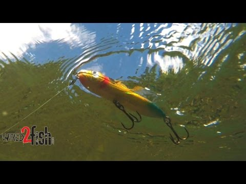 Fish Topwater Walking Baits (Spooks) for Offshore Bass