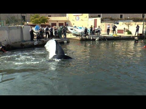 Insolite : une baleine égarée dans le Vieux-Port