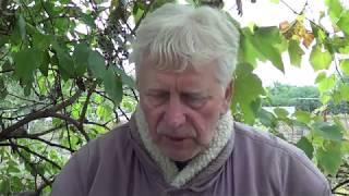 Проклятие крымчанина:  боли, страхи, ужасы, истихоз, голоса...