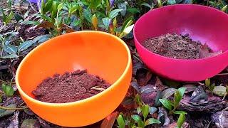 Самый простой СПОСОБ узнать кислая почва или нет.