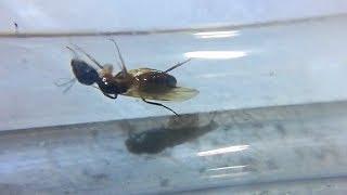 Надоели рыбки? Заведите муравьёв (новости)