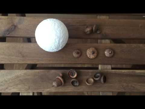 Новогодняя игрушка из природных материалов. Поделки на Новый год для детей