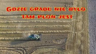 Tegoroczna rekordzistka pszenica Julius/ John Deere 2256/ John Deere 6110MC/ Żniwa 2019 Kula