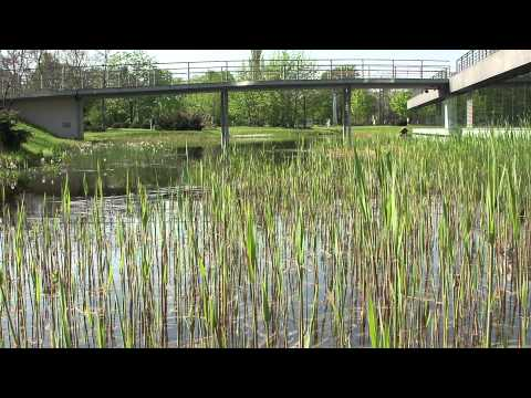 Best Luxury Landscaper Cincinnati