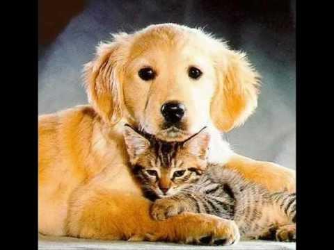 Kutya cica webáruház