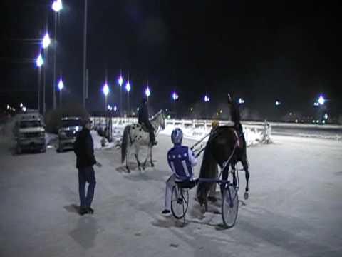 Island Heat - Harness Race Horse: Post Parade at Balmoral Park Race Track