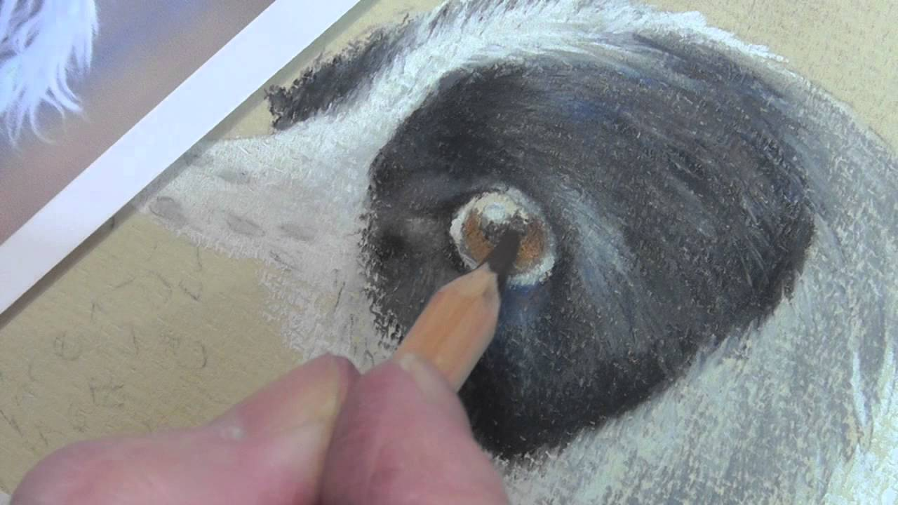 How To Draw A Dogs Eye In Pastel Pencils