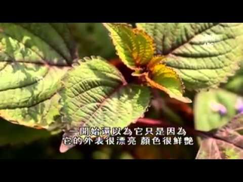 Zenxin Organic Park in Garden of Treasure Sr.2 诚兴绿色有机公园在寻花探草(貳)