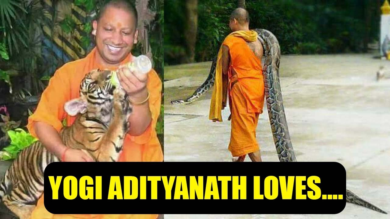 Hd wallpaper yogi adityanath - Yogi Adityanath Has Soft Heart For Animals Pictures Goes Viral Oneindia News