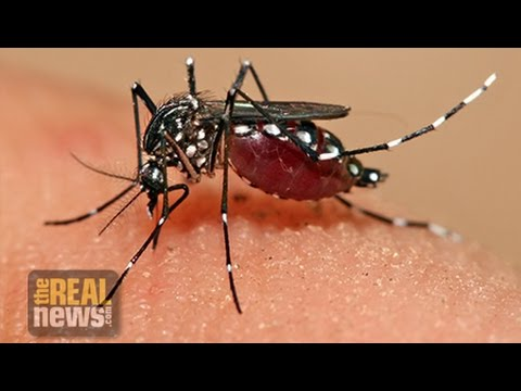 Zika Linked to Deforestation (1/3)