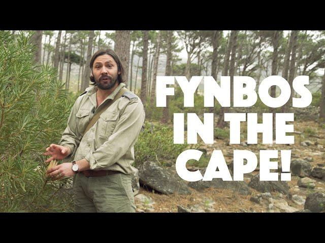 FYNBOS IN THE CAPE !