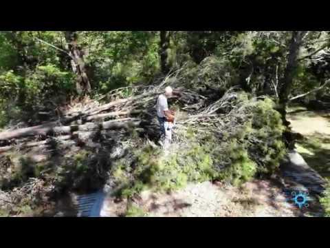 A Friends Hunting Camp / Tree Removal - Gulf Hammock, Inglis, Fl.