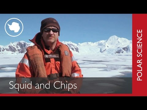 Polar Science in 60 Seconds | Squid and Chips?