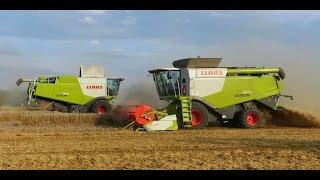 Wielkie Żniwa 2014 Big Harvest in Poland | 5x Claas Lexion | Milikowice | Stary Jaworów |