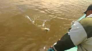 Риболовля на гуркотах Каспію. Астрахань