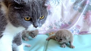 OMG So Cute Mom Cat talking to her Cute Meowing baby Kittens