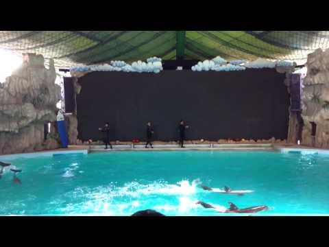 Gelanggang Samudra Ancol : Dolphin Show (Full Version)