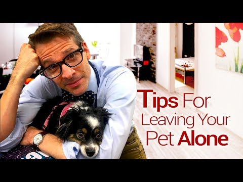 Tips For Separation Anxiety
