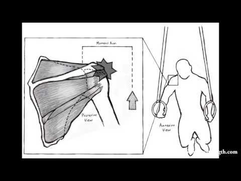 Shoulder Rehab Case Study