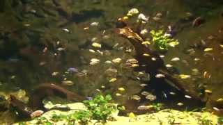 Amazing Aquarium Fish Music- Virtual With A Little Amazing Aquarium Fish Videos Hd Hq