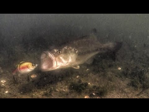 Bed fishing questions for Mark Daniels Jr. (Underwater footage)