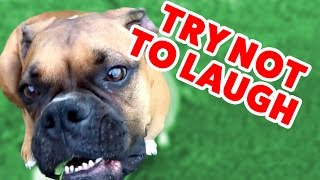 Try Not To Laugh At These Funny Pet Home Videos of 2016 Weekly Compilation | Funny Pet Videos