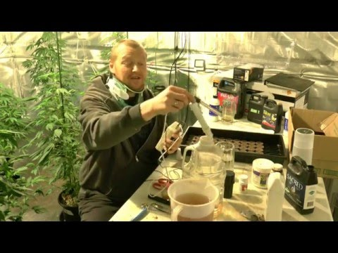 How To Cut Clones From Mother Plants