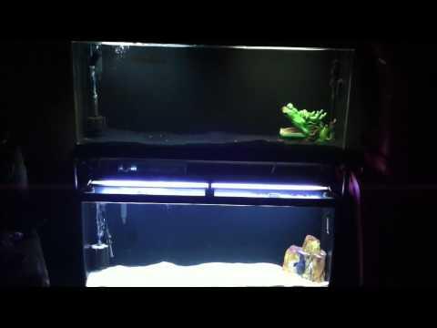Double Aquarium Stand 55 Gallon Youtube