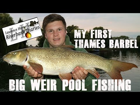 Barbel Fishing On The River Thames -