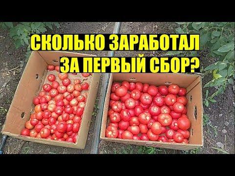 Первые продажи томата 2019. КАКИЕ ЦЕНЫ?