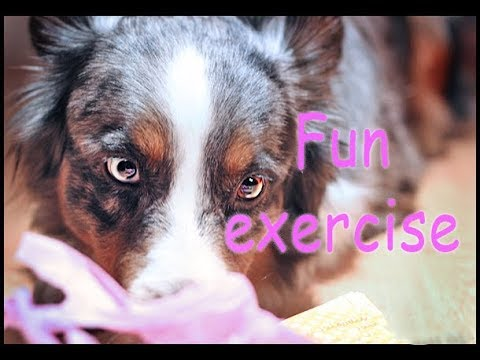 Exercises for dogs with a gym ball