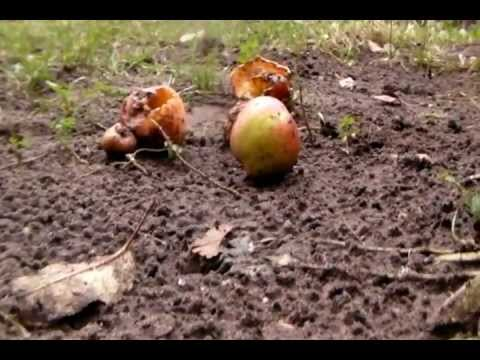 Robert Frost After Apple Picking Youtube