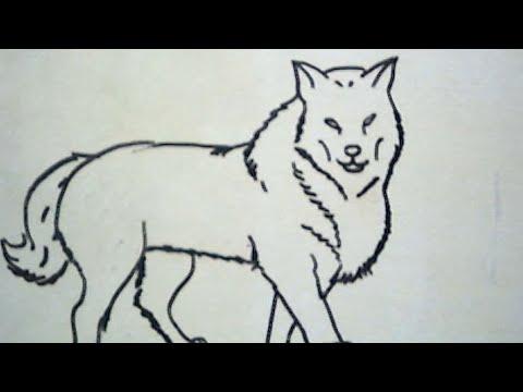 Cara Menggambar Serigala How to Draw a Wolf  YouTube