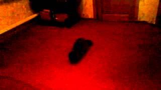 Глупая кошка:-)