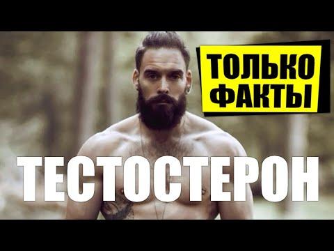 ТЕСТОСТЕРОН ПО ФАКТАМ Что повышает тестостерон