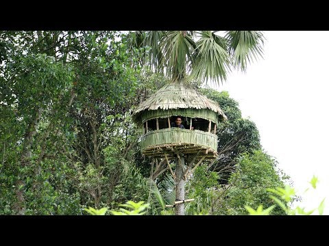 Build An AMazing Round Hut Around Palmyra Palm Tree - Round House Making By Smart Village Boys