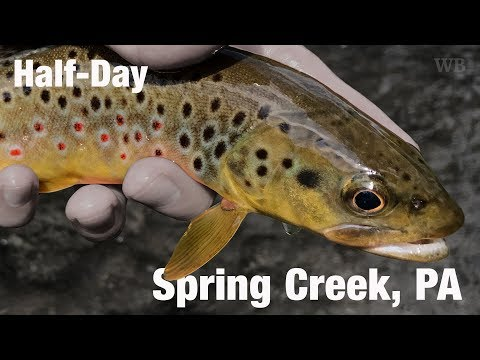 WB - Fly Fishing Half-Day, Spring Creek, PA - August '17