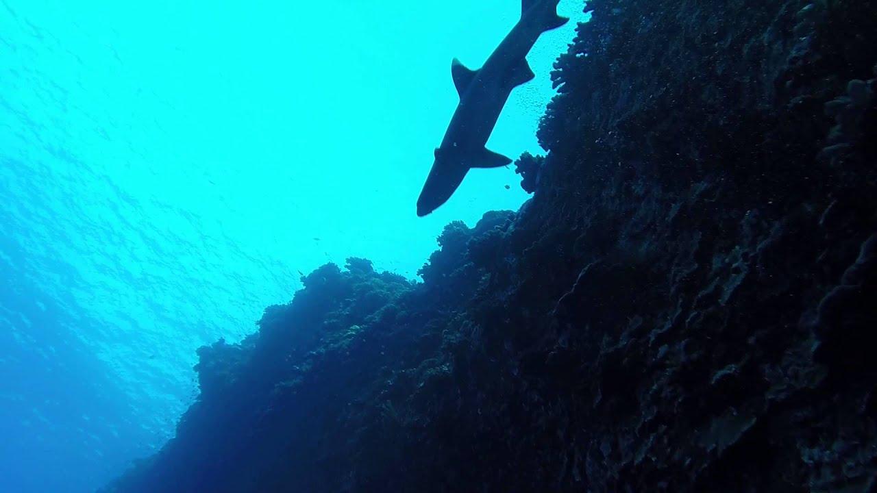 reef shark encounter back wall of molokini crater maui on the reef shark encounter back wall of molokini crater maui on the mike severns dive boat craig walker
