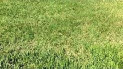 Florida Lawn Care | Bahia vs Common Bermuda Vs St. Augustine Grass