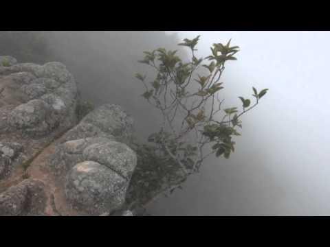 พิษณุโลก210758เที่ยวป่าหน้าฝนชมดอกไม้กลางทะเลหมอกฝน