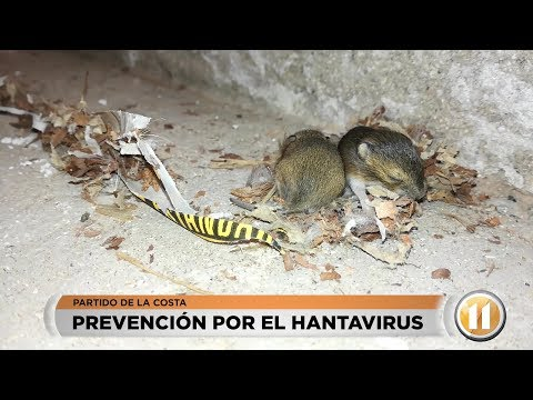 Hantavirus: prevención