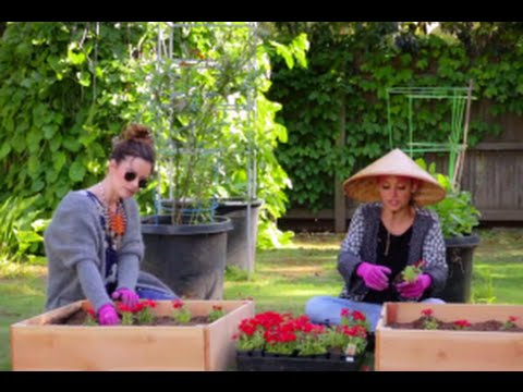 Download Candidly Nicole Season 2 Episode 5 Review & After Show   AfterBuzz TV