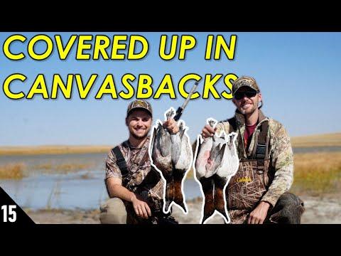 Canvasback LIMITS In The Sandhills! (So Many)   Nebraska Duck Hunting 2020