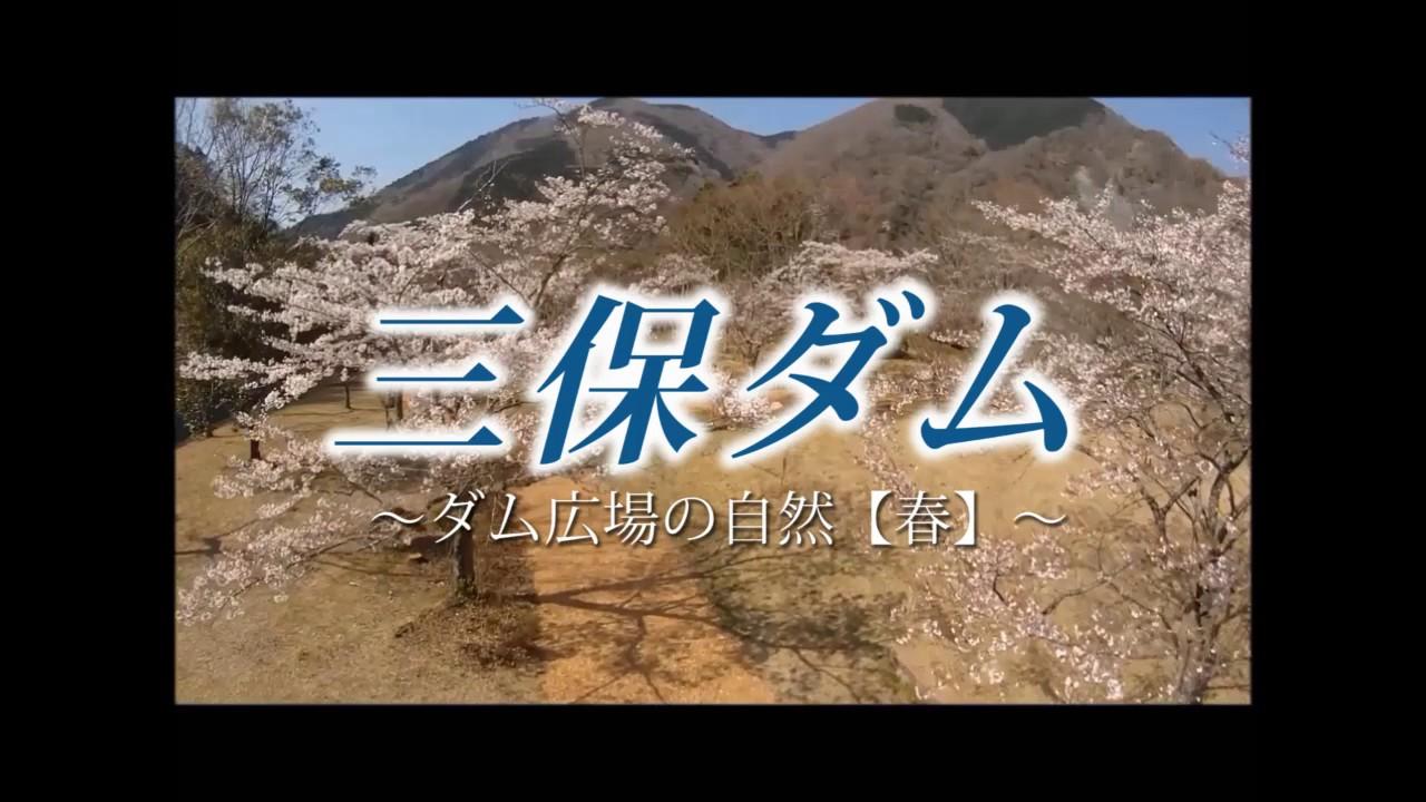 三保ダム・ダム広場の自然【春】<br>(提供:神奈川県企業庁)