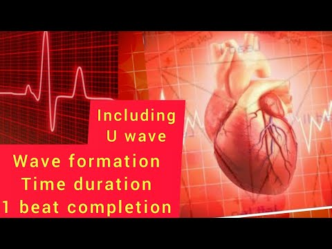 electrocardiography-(ecg/ekg)---basics-to-master-interpretation।-ecg-for-medical।-ecg-concept।